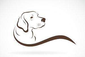 Vector of dog head(labrador). Pet.