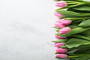 Pink tulips with copy space