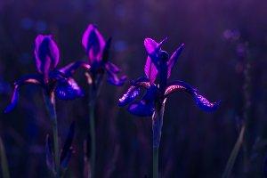 Neon light in the field. Neon flower