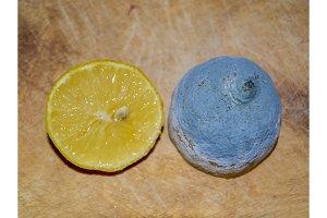 Lemon fruit, normal and diseased