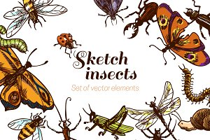 Insects sketch vector set