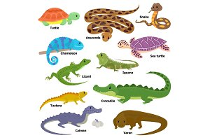 Reptile vector animal reptilian