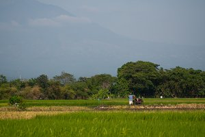 farmer in rice field indonesia
