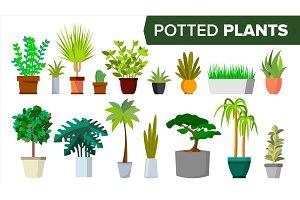 Potted Plants Set Vector. Indoor