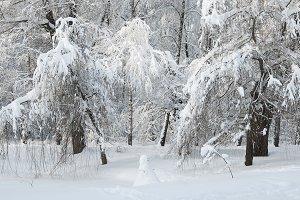 Winter landscape with a park