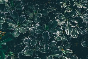 Dark tropical leaves background