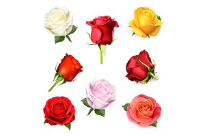 Red, pink, yellow and white roses