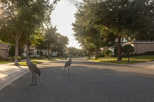 View on the street  with herons