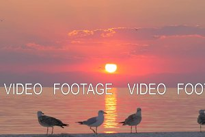 Seagulls and sunset over sea