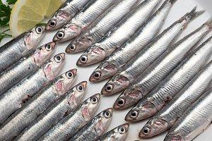 Pattern mediterranean anchovy