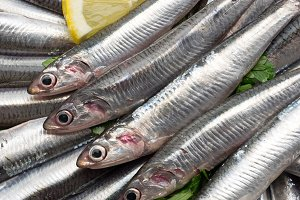 Fresh and raw anchovies close up