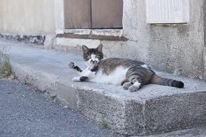 Cat lying in the street