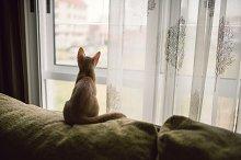 Small kitten sitting on a sofa
