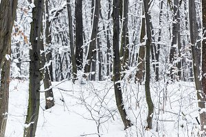 snowy trees and bushes in winter par