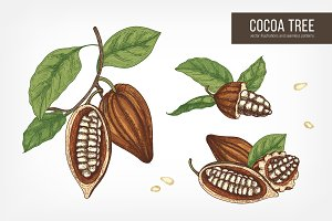 Cocoa tree hand drawn collection