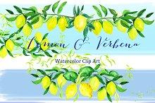 Lemon & verbena. watercolor clipart