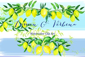 Lemon & verbena. watercolor clipart
