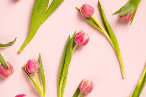 Floral pattern with pink tulips on p