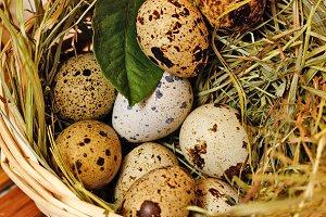 Fresh quail eggs in basket.