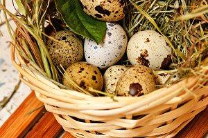 Quail eggs in basket. Dietary.