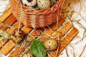 Quail eggs in basket. Protein diet.