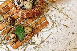 Quail eggs in basket. Healthy food.
