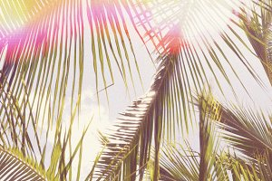 Retro Palm Tree Stock Photo