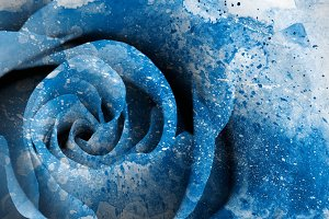 Blue Acrylic Rose