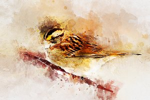 Bird Watercolor Illustrations