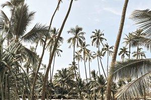 Palm tree grove in Hawaii