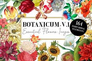 Botanicum - V.1