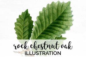 Chestnut Oak Leaf Vintage Leaves