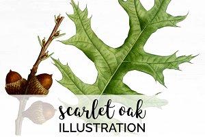 Scarlet Oak Leaf Vintage Leaves