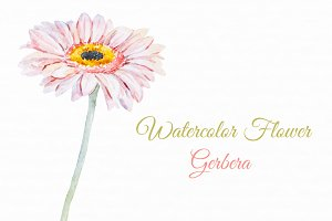 Watercolor gerbera flowers