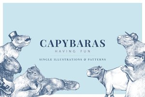 Capybaras - Illustrations & Patterns