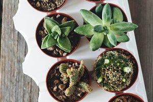 Assorted mini succulents and cacti