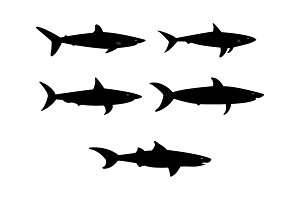 Set of sharks in vector