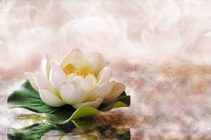 Water lily floating in warm water
