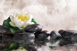 Water lily on black stones
