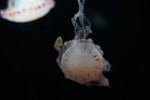 aquarium of jellyfish, fish, seaweed