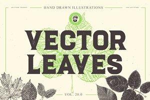VECTOR LEAVES HAND DRAWN BUNDLE v20