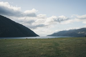 New Zealand countryside farm