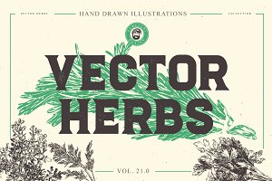 VECTOR HERBS HAND DRAWN BUNDLE v20