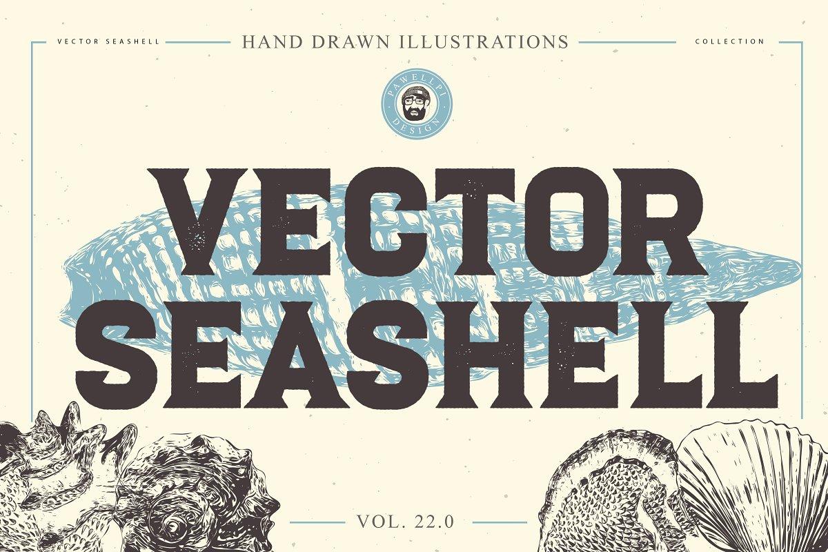 VECTOR SEASHELL HAND DRAWN BUNDLE 22