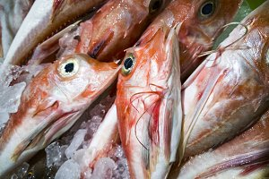 red fish with yellow eyes