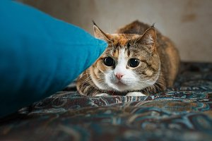 Ginger cat crouched behind the
