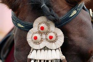 Fair of Seville. Horse close up