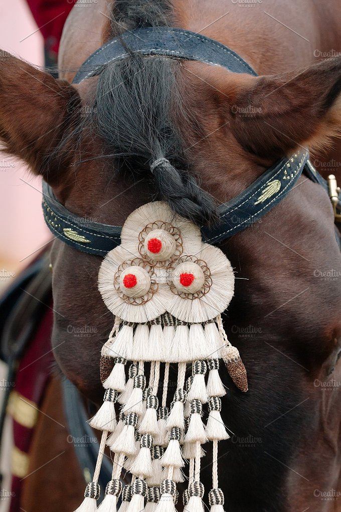 Fair of Seville. Horse close up - Animals