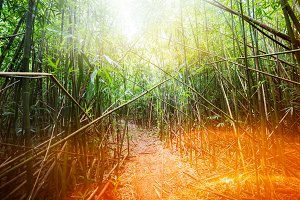 Bamboo young forest