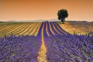 Scented fields
